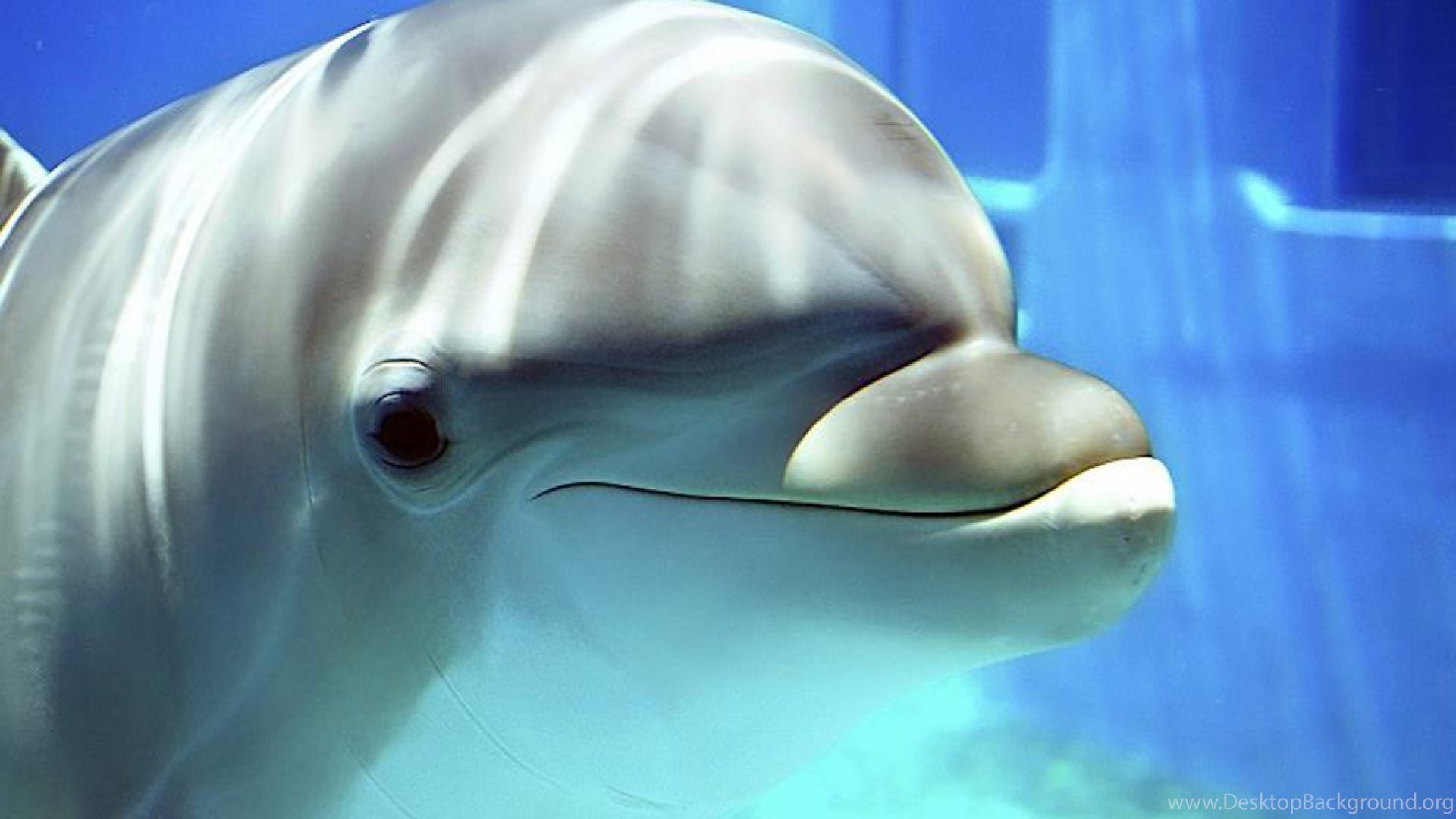 Dolphin wallpapers 28 hd wallpaper wallpapers pics the best popular voltagebd Image collections