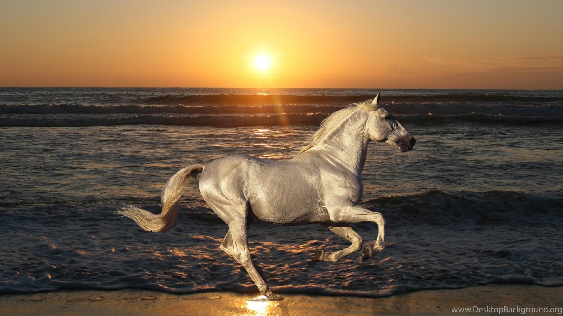 Horse High Resolution Wallpapers High Definition Animal Wallpapers