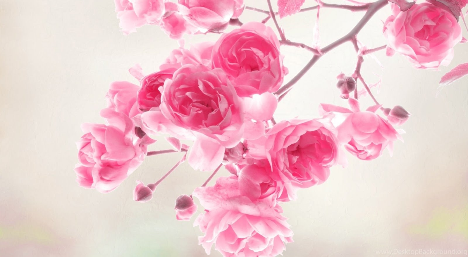 Beautiful Pink Flowers Backgrounds Hd Wallpapers Desktop Background