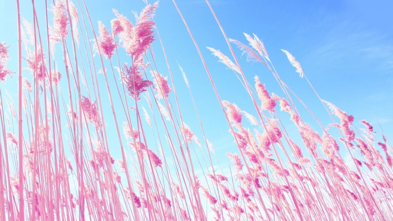wallpapers wide 1366x768 pink - photo #5