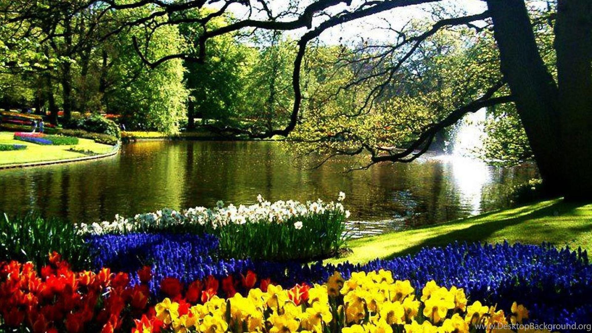 Flowers in keukenhof netherlands wallpaper desktop - Jardines de holanda ...