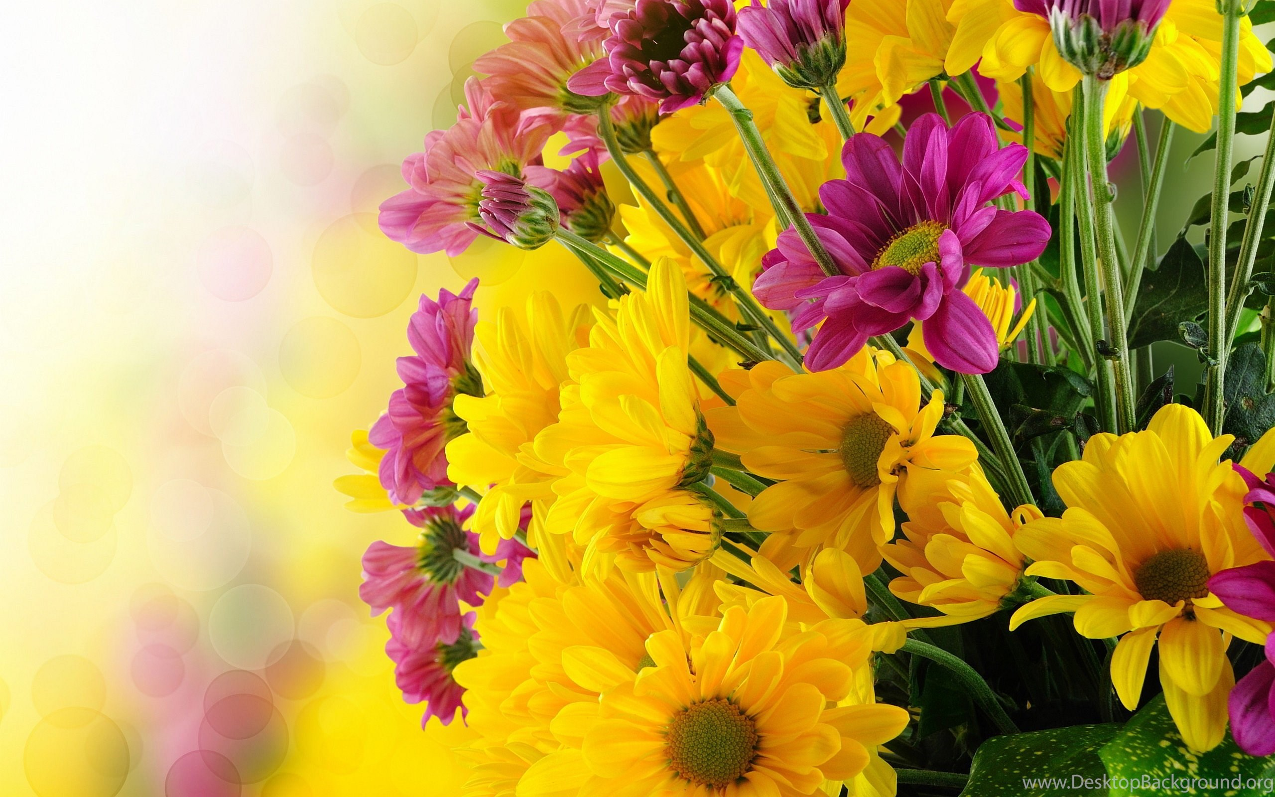 bunch pink yellow flowers online wallpapers hd