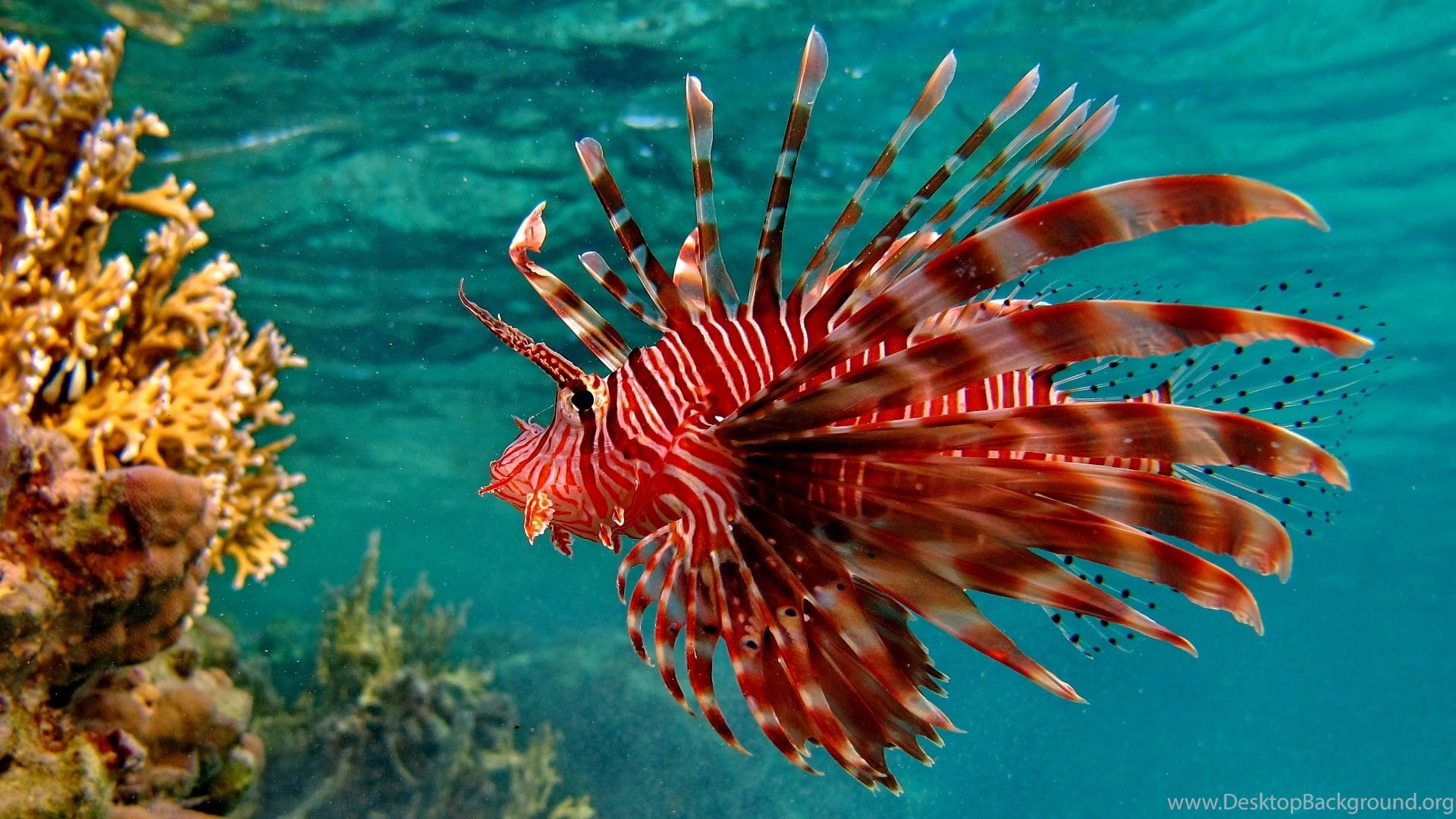 Beautiful And Colorful Ocean Fish HD Wallpapers – Today Picture ...