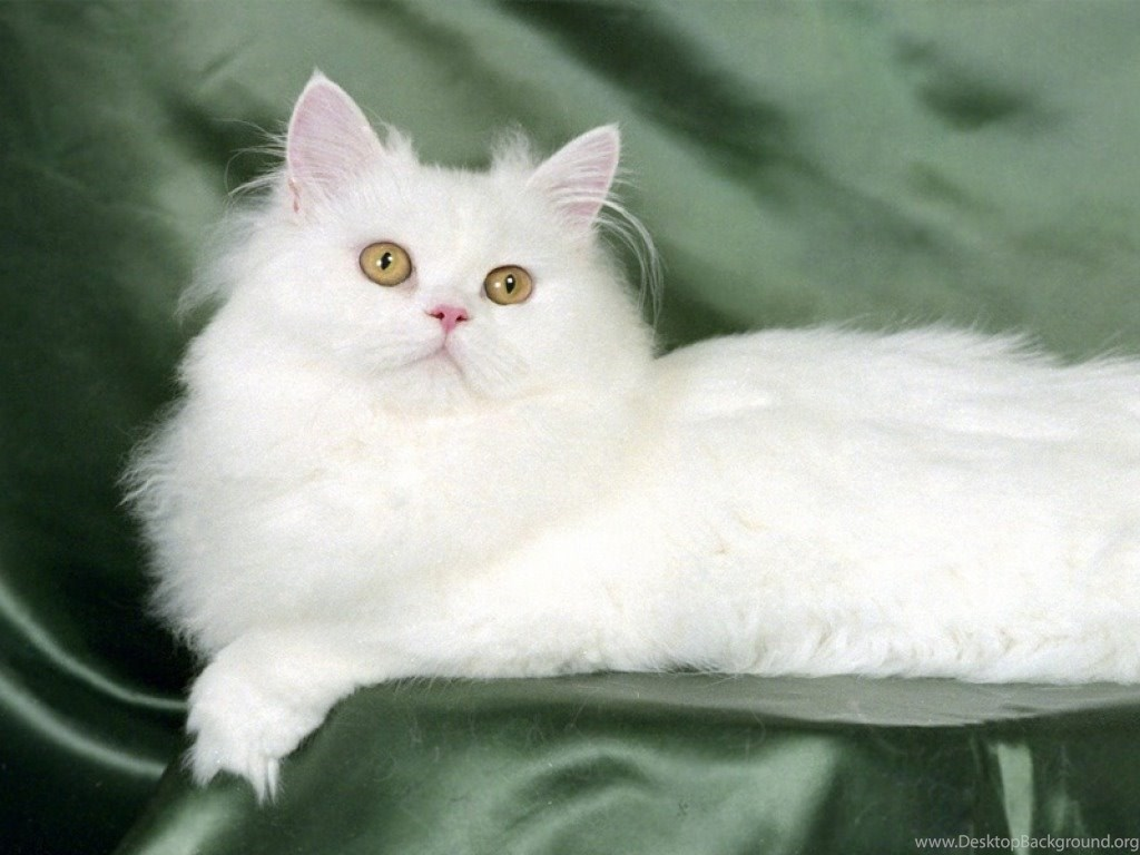 Beautiful Cute Cat See Hd Wallpapers Desktop Background