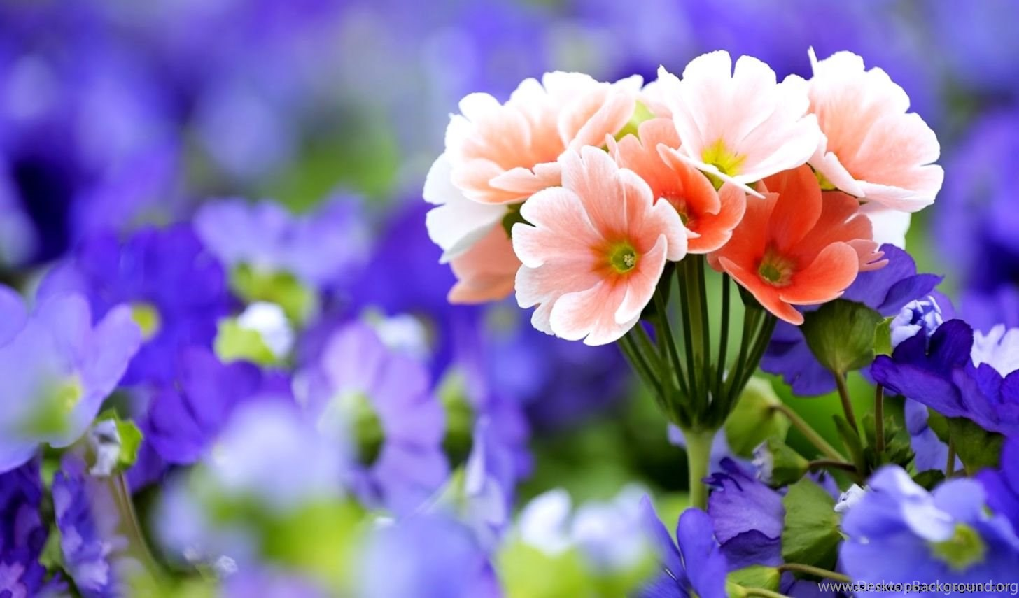 Very Pretty Flowers Pictures Desktop Background
