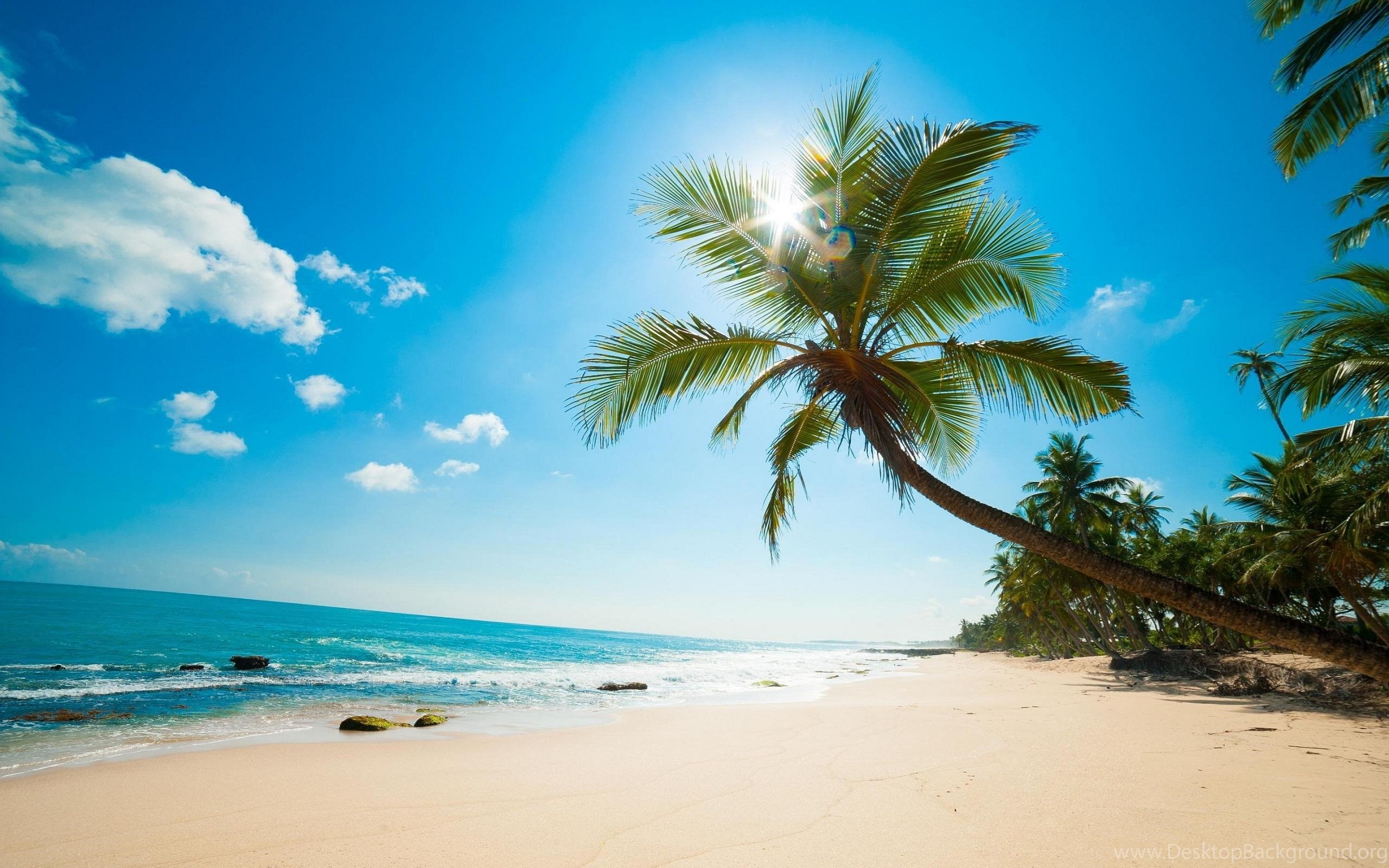 Caribbean Beach Palm Tree Wallpapers Desktop Background