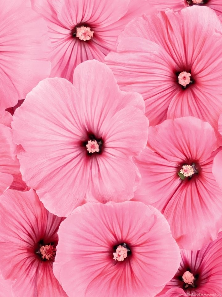 Beautiful Flowers Wallpapers Best Flowers For Lock Screen And ... Desktop  Background
