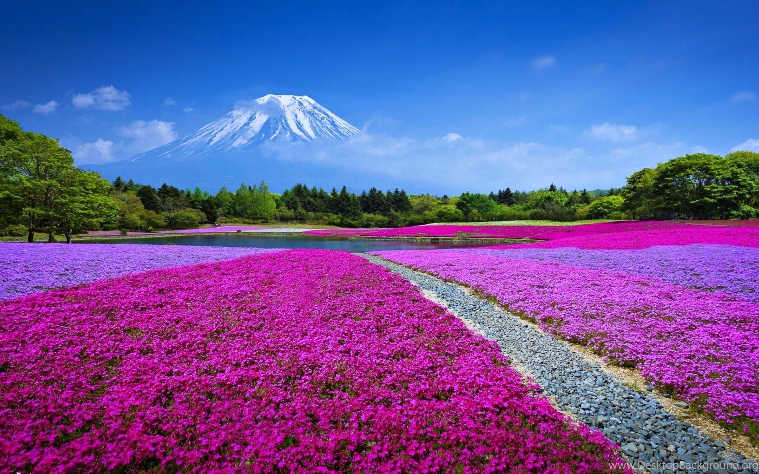 Kyoto Japan Sakura Wallpapers HD Beautiful Landscape Desktop