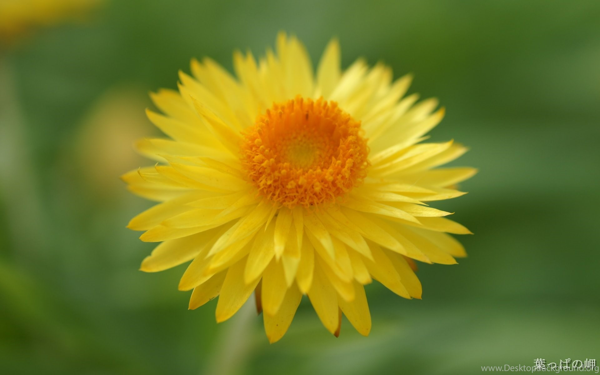 Most Beautiful Flowers Photos Wallpapers Hd Wide Desktop Background