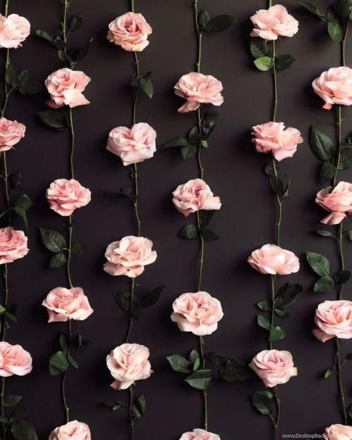 1045282 flower tumblr wallpapers wallpapers