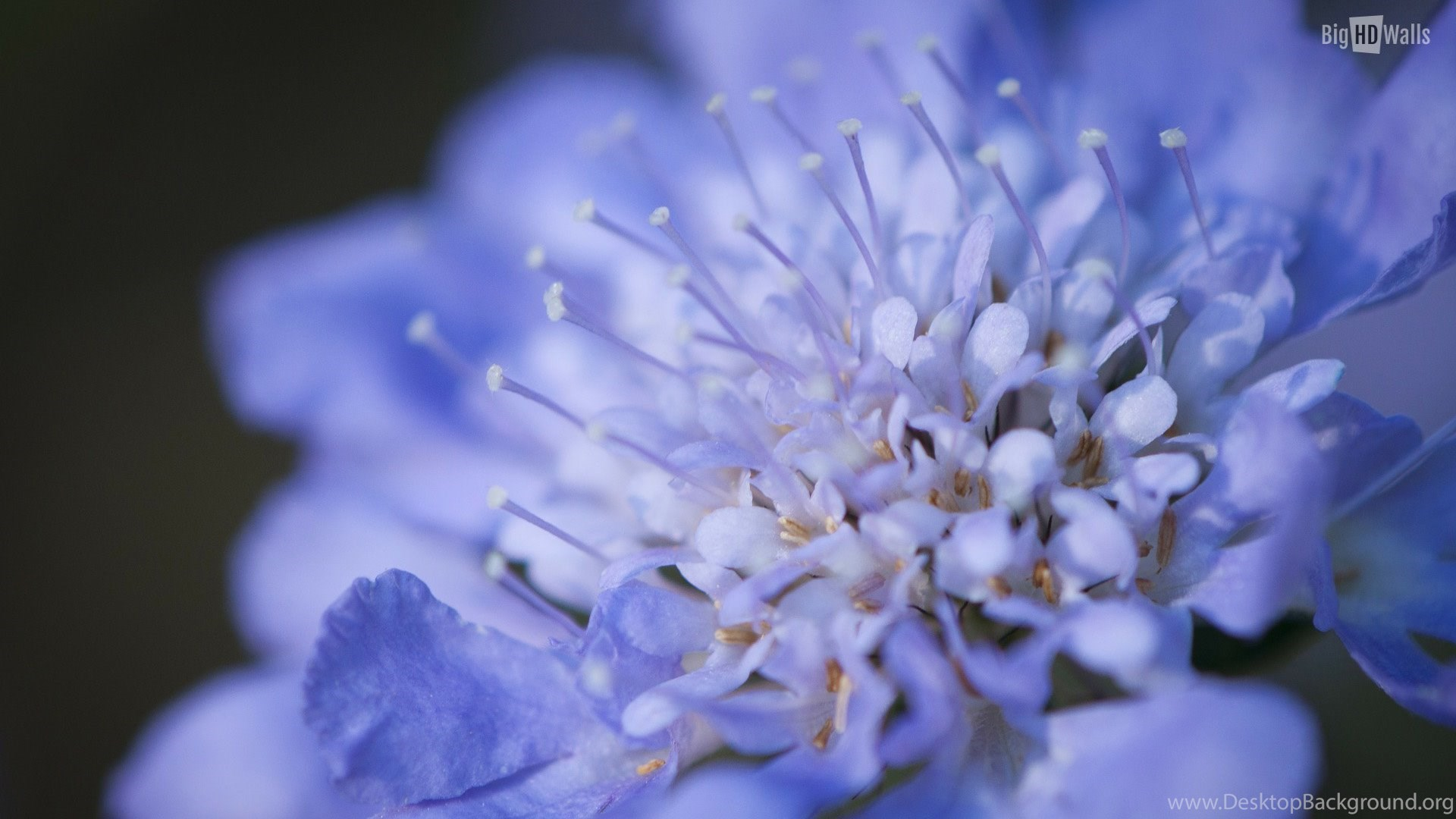 10 Spring Flowers Hd Wallpapers Desktop Background