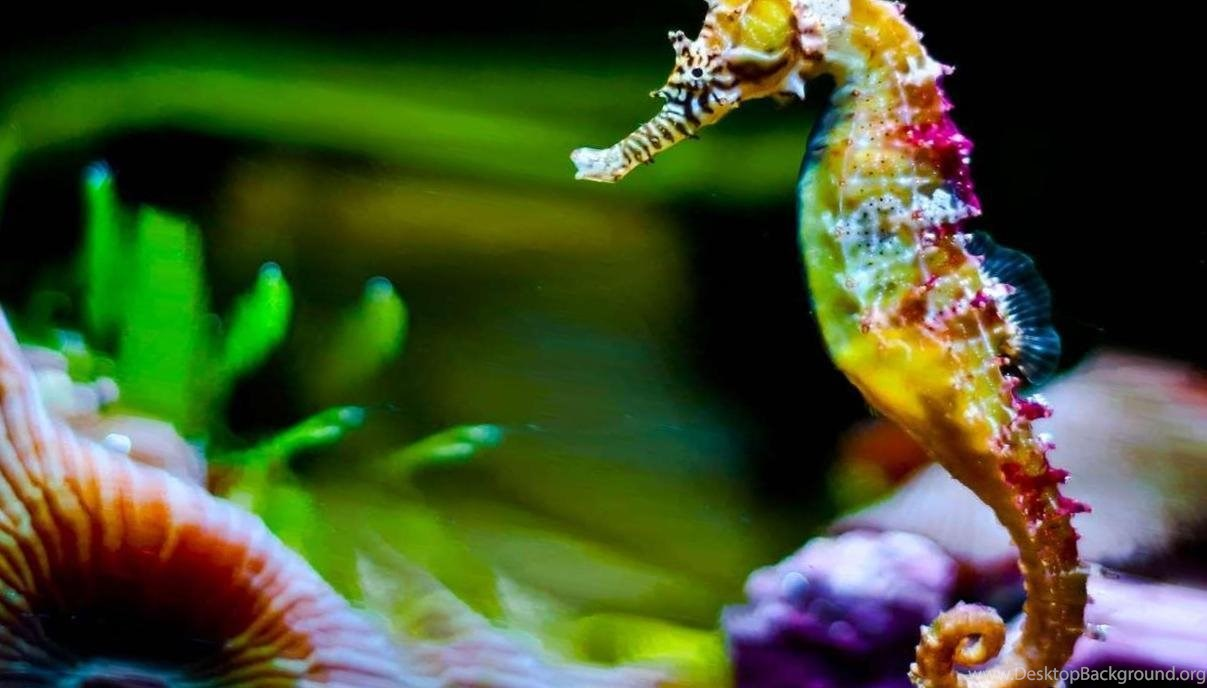 seahorse live wallpapers android apps on google play