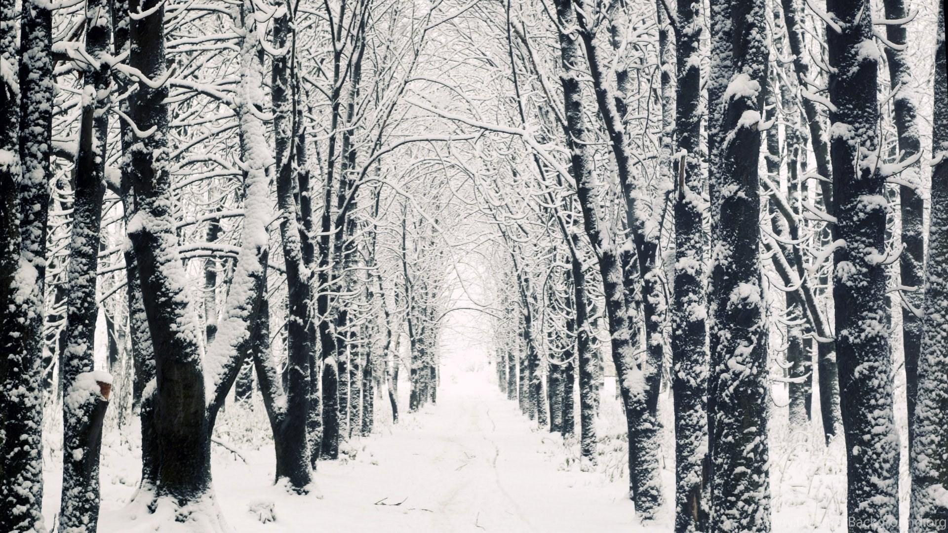 Most Inspiring Wallpaper Mac Winter - 1051588_snowy-apple-mac-hd-wallpapers-winter-forest_1920x1080_h  Pic_92364.jpg
