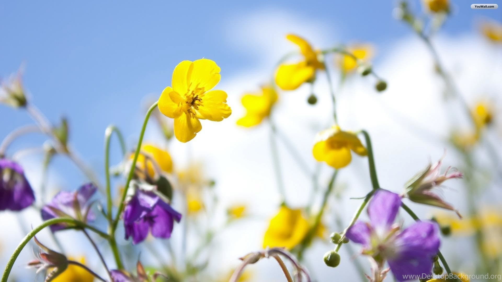 Free Spring Wallpapers And Screensavers Desktop Background