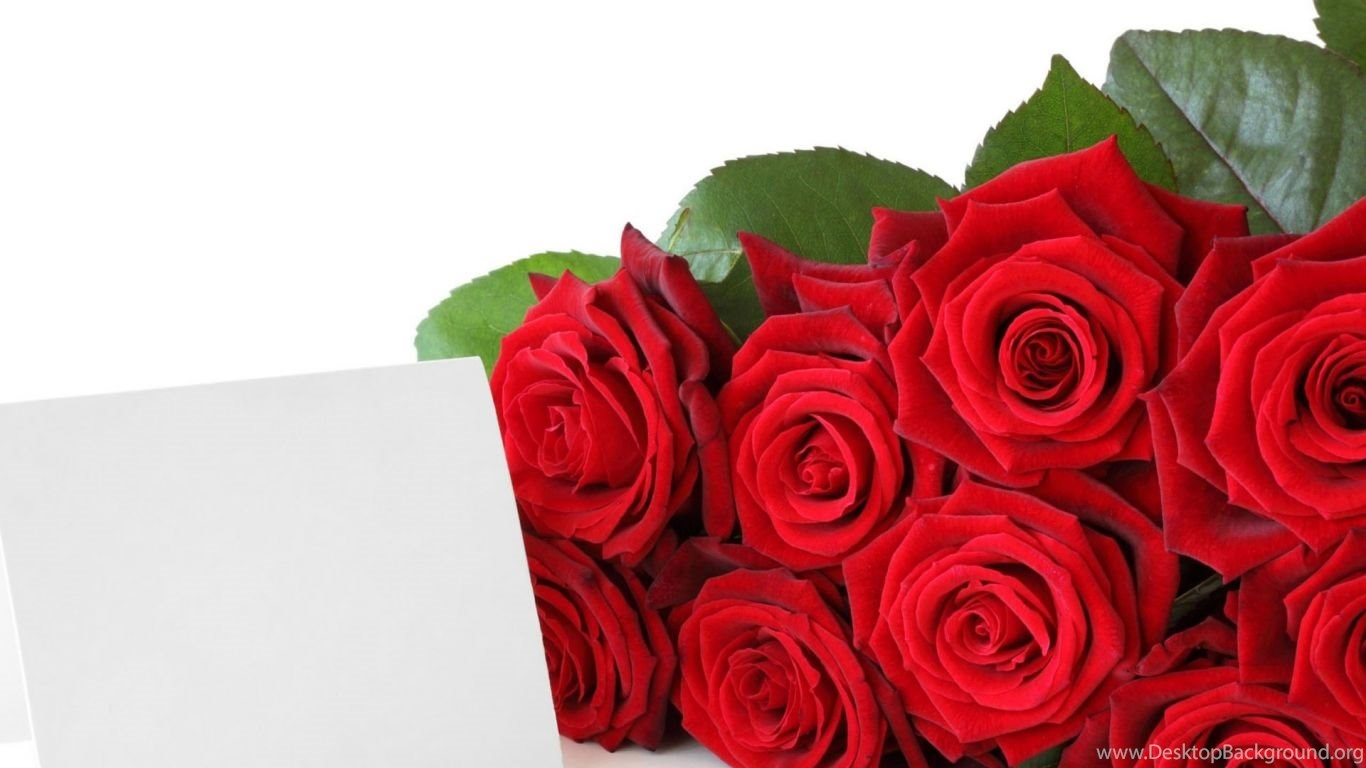 red roses for free download beautiful rose flower wallpapers free