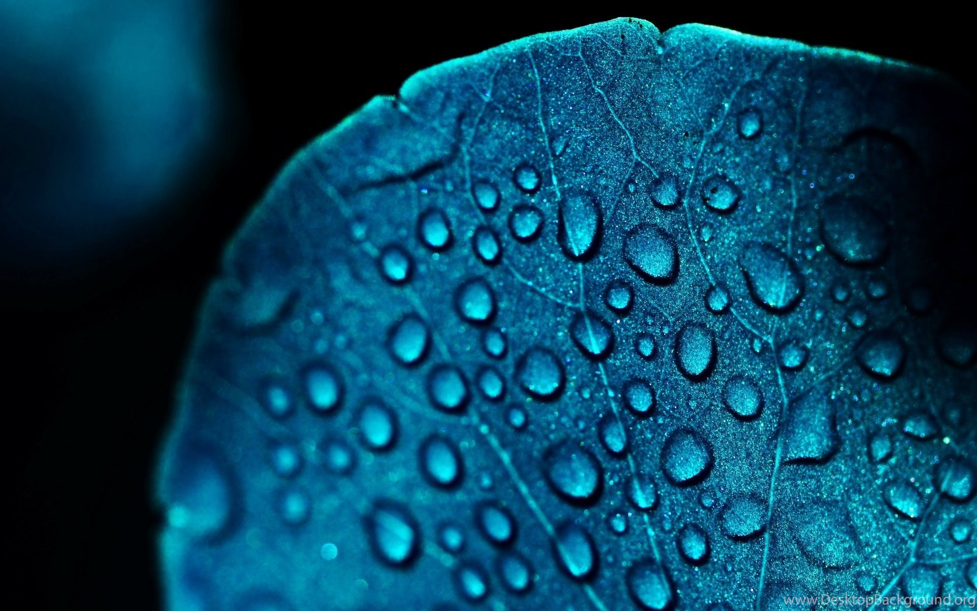 macro hd wallpaper ultra blue - photo #1