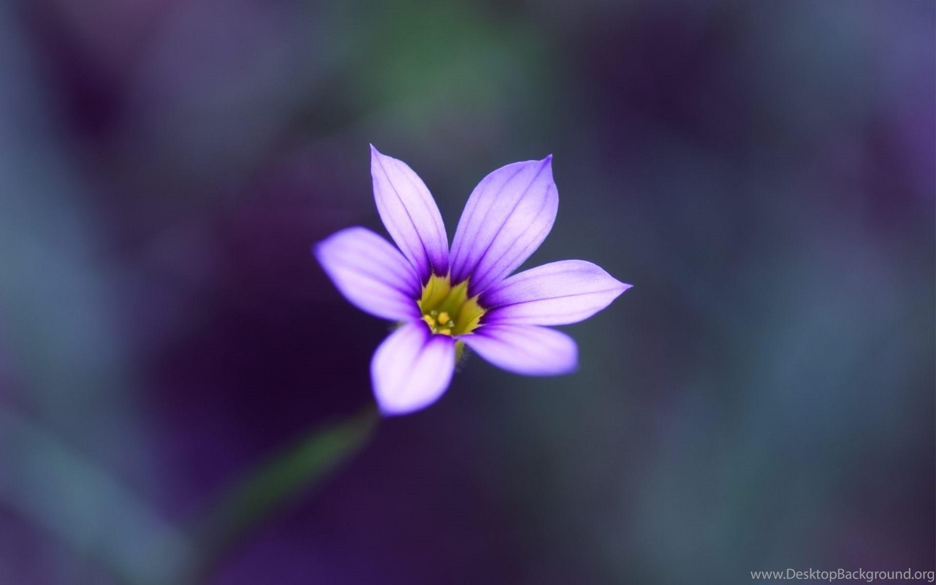 Single Flower Beauty Hd Wallpapers For Desktop Mobile Desktop