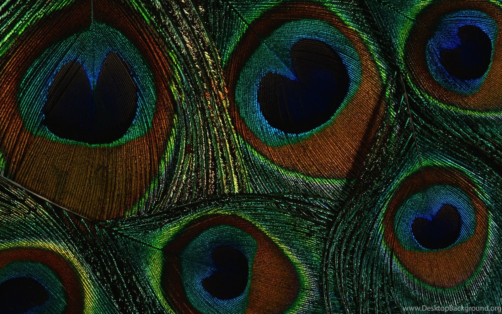 Hd wallpaper unique - Peacock Colorful Feather Wallpapers Unique Hd Wallpapers Hd
