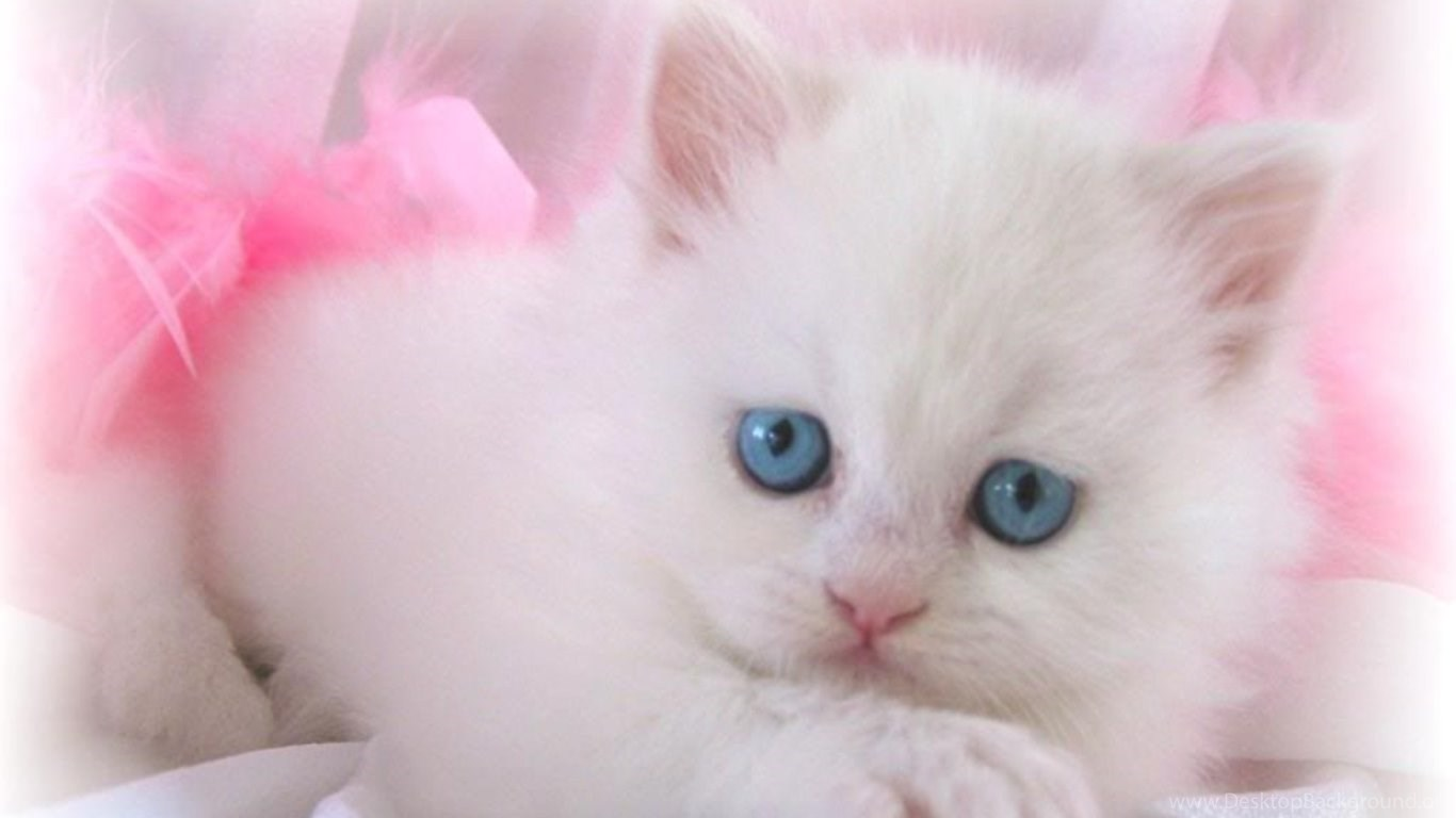 Cute White Cats And Kittens Wallpaper Desktop Background