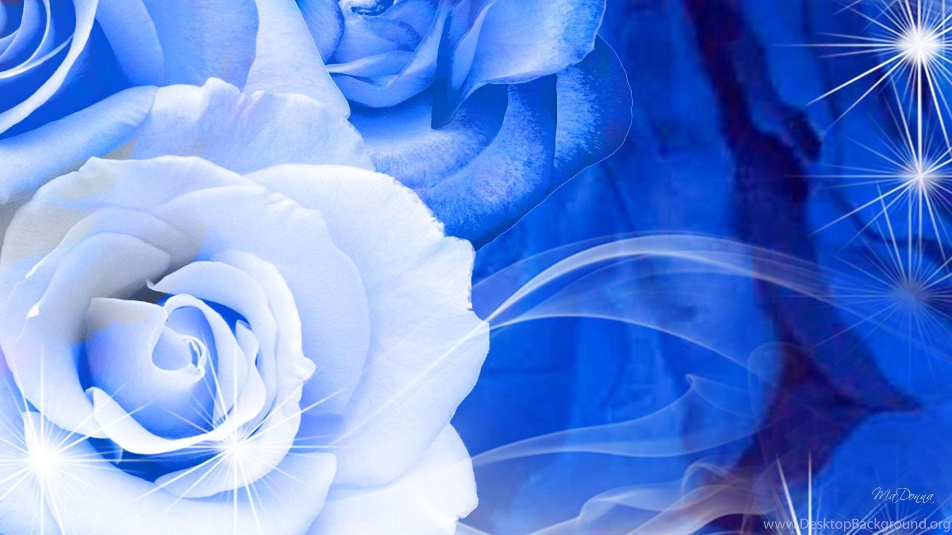 blue rose wallpapers >> backgrounds with quality hd desktop background