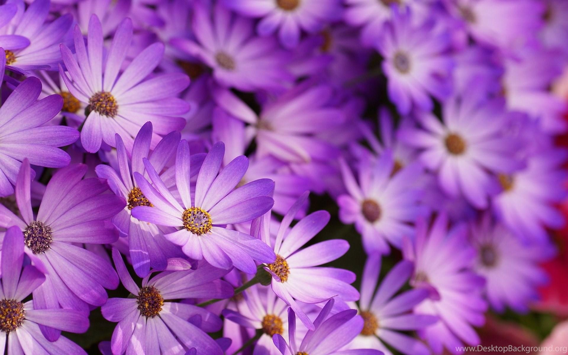 purple flowers download