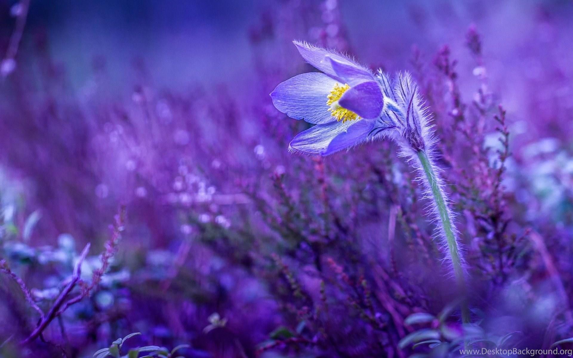 Lilac Flower Wallpapers Download Of Beautiful Purple Flower Desktop
